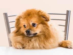 Kostenlose Hundefutter-Probe von Dinner for Dogs