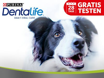 Purina Dentalife Gratis testen