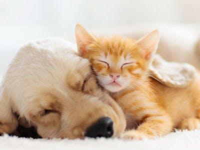 Kostenlose Futterprobe (Katze/Hund) von Reico Vital