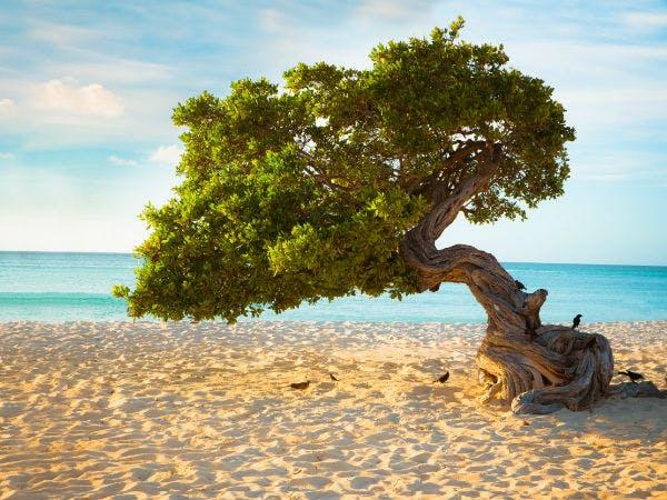 Traumhafter Urlaub auf Aruba am Eagle Beach
