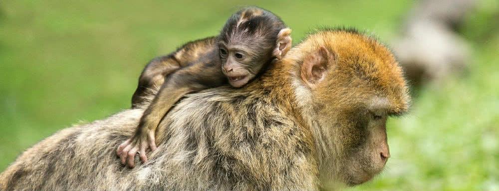Günstig in den Zoo: Tierpark Hellabrunn Rabatt für die ganze Familie