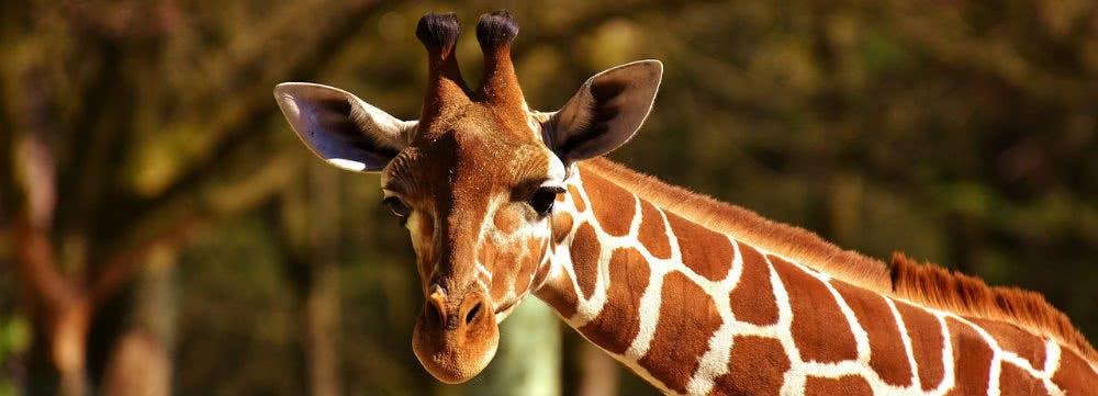 Günstig in den Zoo: Zoo Berlin Rabatt für Kind und Kegel dank Sparaktionen