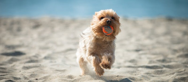 Mit diesen Tipps wird der Sommer mit deinem Hund garantiert wunderbar.
