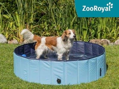 Die perfekte Abkühlung für den Sommer: der Trixie Hundepool