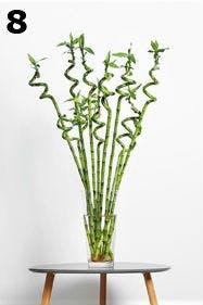 Blumen sind beim Lagon-Stil erlaubt, aber nur schlicht.
