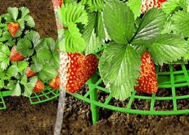 Pflanzen von Baldurs Garten