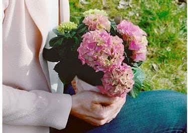 Prima Geschenkidee zum kleinen Preis: Schnittblumen von Blume2000