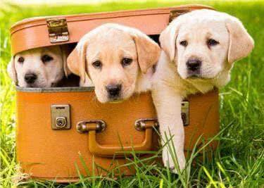 Verwöhne deinen Hund und spare mit einem Petmeds-Gutschein