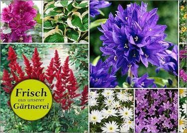 Gartenartikel und Blumen bei Pflanzen-Kölle