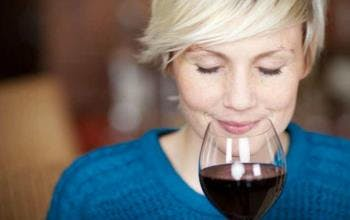 VineShop24 einkaufen beim Weinexperten