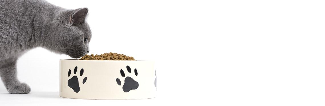 Katze - Gutscheine & Rabatte