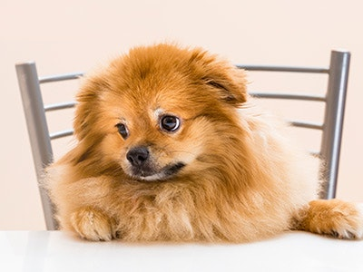 100% kostenlos: Gratis-Hunde-Menü anfordern