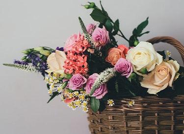 Blumen-Abo-Vergleich