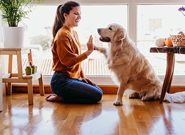 Vergleiche Hundehaftpflichtversicherungen