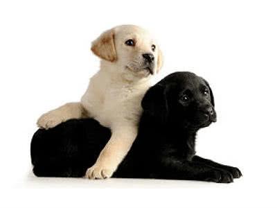 BELCANDO Hundenahrung oder LEONARDO Katzennahrung gratis testen