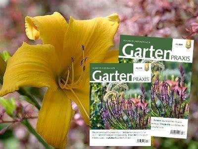 "2x ""Gartenpraxis"" Magazin gratis bestellen"