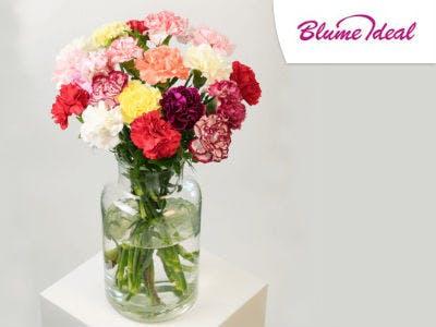 28 bunte Nelken für nur 14,99€ bei BlumeIdeal