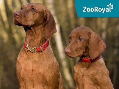 Tierisch guter Deal: Spare jetzt bis zu 10% bei ZooRoyal